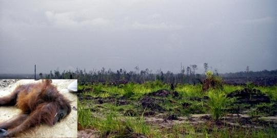 Terrenos de los Dayak.jpg