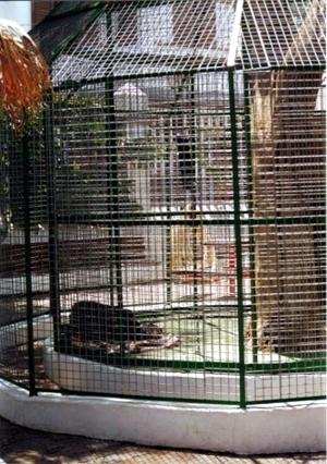 Lulú en su primera jaula.