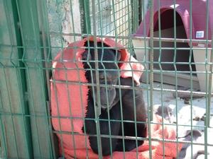 En la planta de residuos, su refugio era una caseta de perros de plástico.