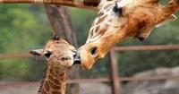 Animales de luto; estudios apuntan que también pasan por un duelo