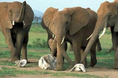 Animales que lloran a sus difuntos