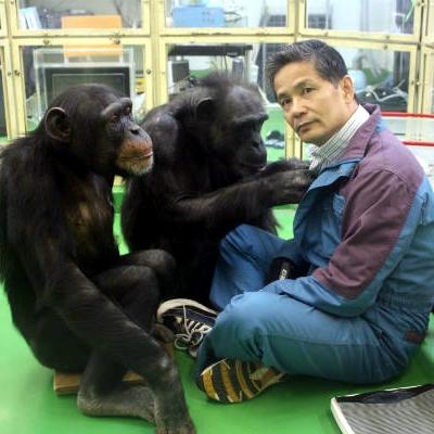 Chimpancés poseen mayores capacidades de memoria de corto plazo que los humanos