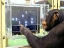 Los animales son más inteligentes de lo que se pensaba
