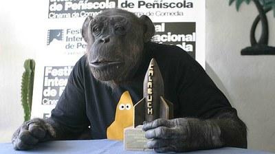 """Muere Jiggs, el chimpancé que interpretaba el papel de """"Cheeta"""" en las peliculas de Tarzán."""
