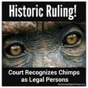 Un juzgado norteamericano otorga el Hábeas Corpus a dos chimpancés