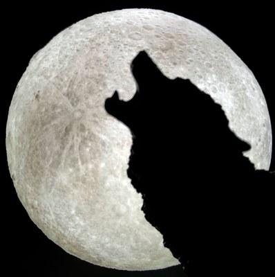 Alegaciones presentadas por Proyecto Gran Simio sobre el lobo ibérico.