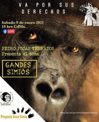 Charla por videoconferencia: Los grandes simios