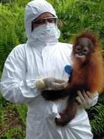 Compra de Equipos de Protección Individual para el personal que trabaja directamente con orangutanes rescatados.