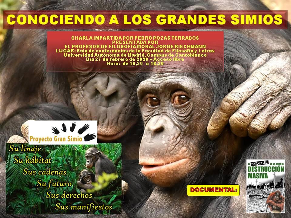 CONOCIENDO A LOS GRANDES SIMIOS