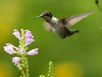 En defensa de la biodiversidad de nuestro planeta