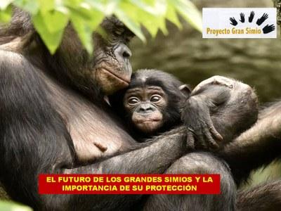 """Jornada """"El futuro de los grandes simios y la importancia de su protección"""""""
