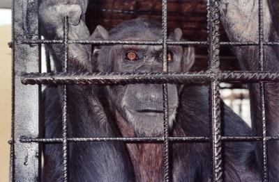 """""""La crueldad neuronal en la cautividad de los animales"""""""