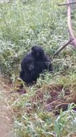 La inhumana caza y tráfico de las especies salvajes.  Lecciones tras la pandemia