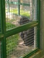 La jueza encargada del caso de toti realiza una visita sorpresa al zoo Bubalcó donde se encuentra cautivo el chimpancé Toti.