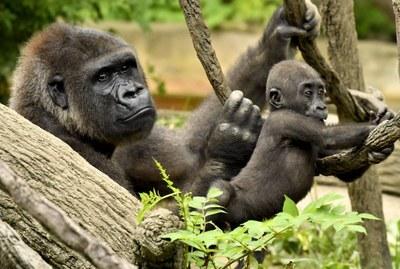 Los grandes simios: un genocidio consentido.