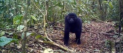 NOTICIA URGENTE: Camerún cancela la concesión maderera del Bosque Ebo.