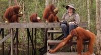 Proyecto Gran Simio financia una petición de ayuda urgente solicitada por la Dra. Biruté M.F. Galdikas para el Campo Leakey del Parque Nacional Tanjung Puting de Borneo