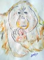 Proyecto Gran Simio lanza un concurso artístico y de literatura con el tema principal de los grandes simios y su protección.