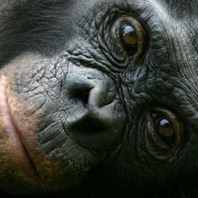 Proyecto Gran Simio se reúne con la Dirección General de los Derechos de los Animales
