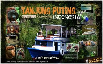 PARA VER ORANGUTANES EN INDONESIA
