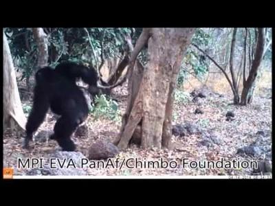 ¿Creen los chimpancés en Dios?