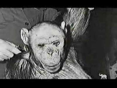 Mono Humano: Oliver - Primera Parte