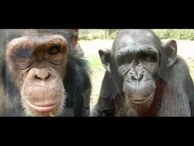 Los grandes simios, Patrimonio Vivo de la Humanidad