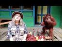 Biruté Galdikas: los grandes simios, Patrimonio Vivo de la Humanidad