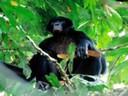 Seguimiento de bonobos en Congo